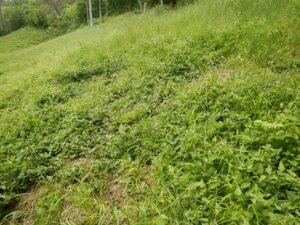 Ochrona muraw kserotermicznych wpolsko-niemieckim obszarze przygranicznym / Schutz der Trockenrasen im deutsch-polnischen Grenzgebiet INT162 (2019-2022)