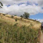 Ochrona muraw kserotermicznych w polsko-niemieckim obszarze przygranicznym / Schutz der Trockenrasen im deutsch-polnischen Grenzgebiet INT162 (2019-2022)