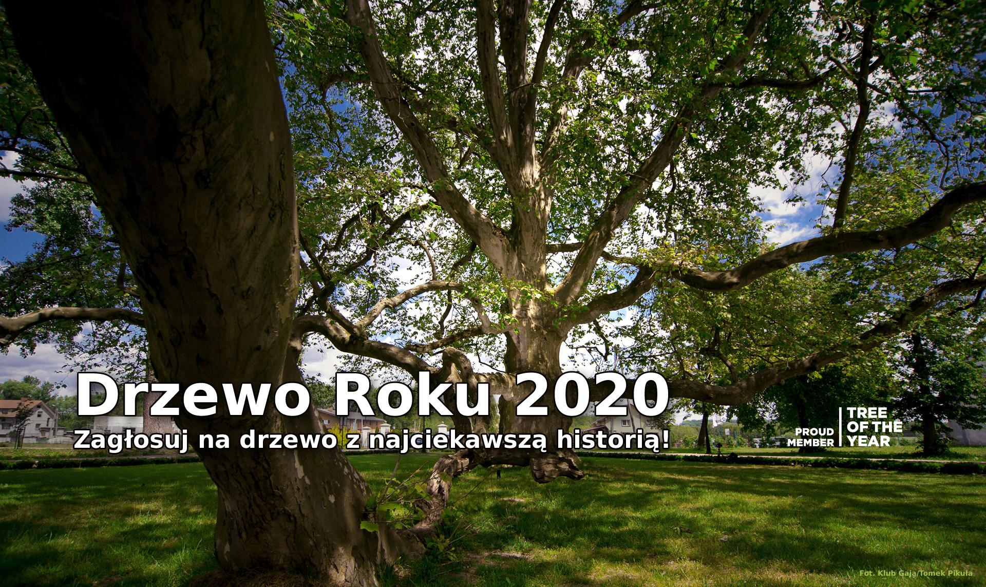 Drzewo Roku 2020 – rywalizacja trwa!