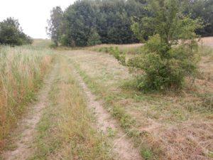 Ochrona muraw wpolsko-niemieckim pasie granicznym rozpoczęta także postronie polskiej!