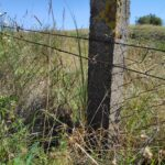 Instalacje graniczne atransgraniczny wypas owiec wprojekcie INT162
