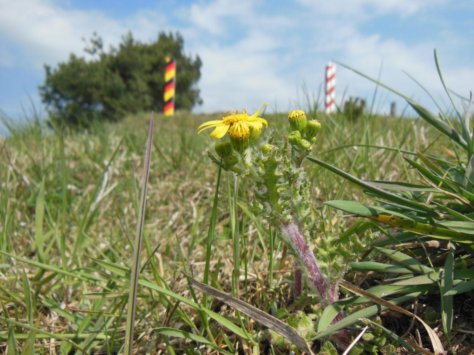 Pierwsze tegoroczne rośliny kserotermiczne już widoczne na murawach projektu INT162