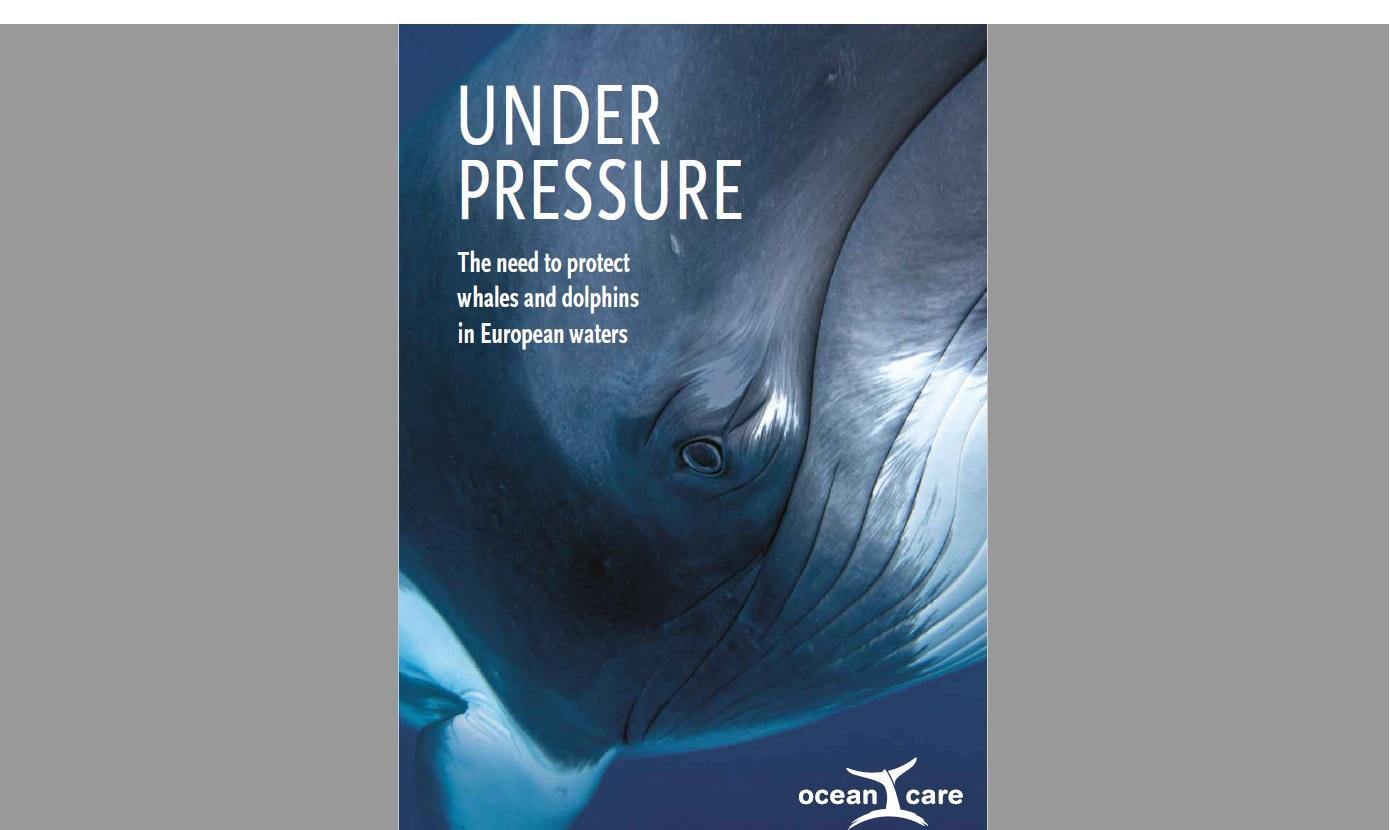 """""""Pod presją: Potrzeba ochrony wielorybów i delfinów w wodach europejskich"""" - aktualny raport  OceanCare"""