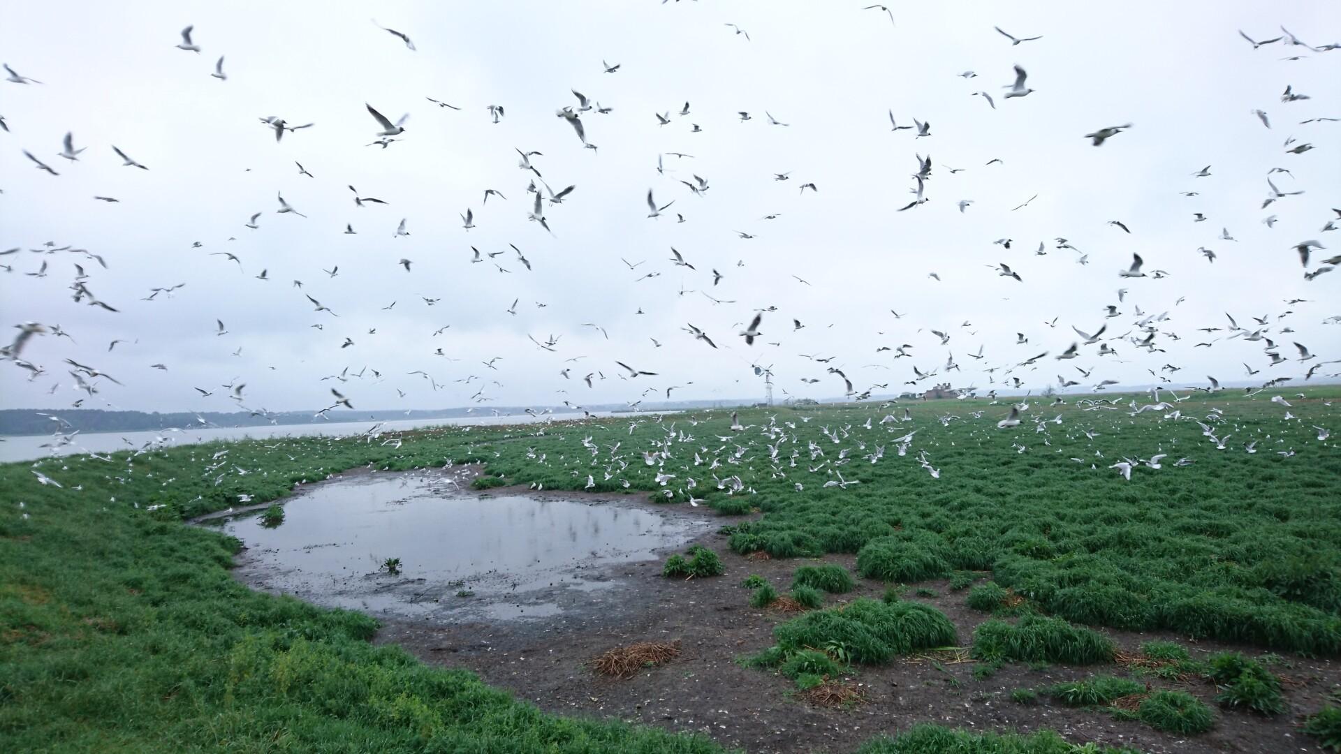 """""""Unifikacja systemu monitoringu ornitologicznego w polskiej i niemieckiej części regionu Zalewu Szczecińskiego"""" - webinarium już 17 czerwca 2021 r."""