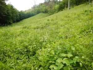Kontynuacja zabiegów ochrony czynnej w projekcie INT162 - usuwanie odrośli krzewów
